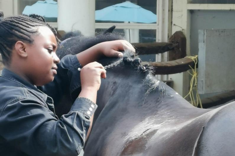 A young person cleaning a horse